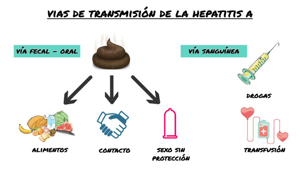 Transmision hepatitis A