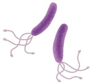 Dibujo helicobacter pylori