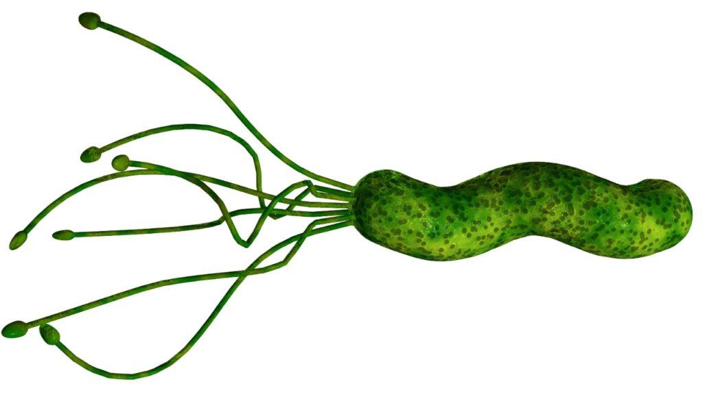 Helicobacter pylori realista